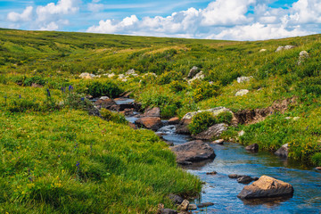 Spring water stream in green valley in sunny day. Rich highland flora. Amazing mountainous vegetation near mountain creek. Wonderful paradise scenic landscape. Paradisiacal sunny picturesque scenery.