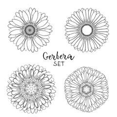 Set of 4 Open petals daisy head flower. Floral Botany drawings. Black and white line art. Gerbera daisy Sketch illustration. Element for design on for greeting cards, wedding invitations, mother's day