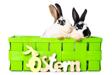 Rabbits in a green basket
