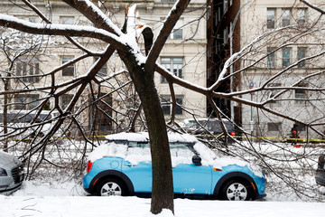 A car sits beneath broken branches that fell on it during a snow storm in upper Manhattan in New York