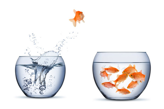 gold fish change move retrun separartion family teamwork concept jump into other bigger bowl isolated background