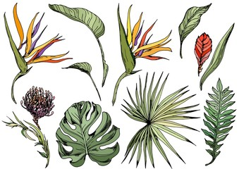 Set of tropical leaves and exotic flowers, strelitzia, bromeliad. Isolated elements for design. Hand drawn vector.