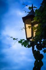 Old Lantern Light at Evening / Detail of illuminated nostalgic lantern with climbing plant leaves at dark blue twilight sky background (copy space)