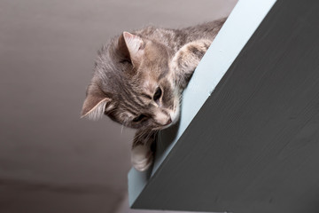 Lovely, calm cat lies on a shelf under the ceiling and looks down.