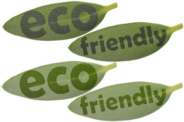 Set of leaves in closeup and the highlighted words eco and friendly - symbols to use as a reference for eco products