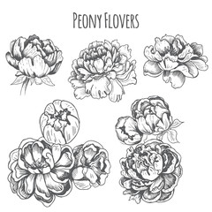 Vector illustration sketch - card with flowers chrysanthemum, peony. Pattern with flowers. Dahlias, Ruscus, Viburnum.