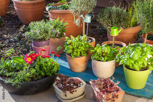 Fotolia & Variation of flower pots with herbs and other plants\