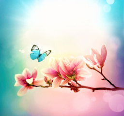 View of beautiful magnolia and butterfly with blue sky background. Spring and summer concept.