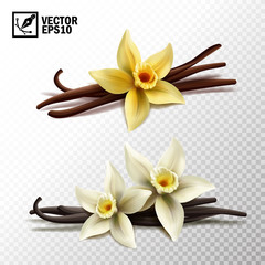 3d realistic vector isolated vanilla sticks and vanilla flowers in yellow and white