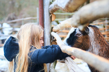 A young child blond girl feeding goat.