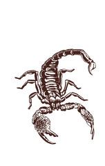 Graphical scorpion, vintage illustration,retro sketch