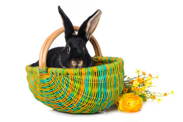 Cute rabbit in a colorful basket with flowers