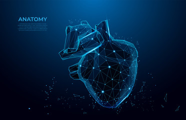 Human heart anatomy form lines and triangles.  Polygonal 3D human organ on blue background. Medicine concept with geometry triangle. mesh art