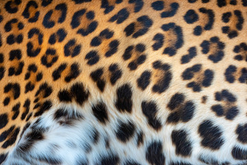 Wall Mural - Leopard skin texture for background