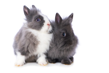 Cute dwarf rabbits on white background