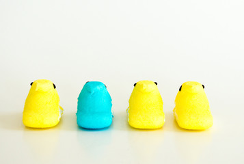 stand out from the crowd-3 yellow and one turquoise marshmallow Easter peeps isolated on white