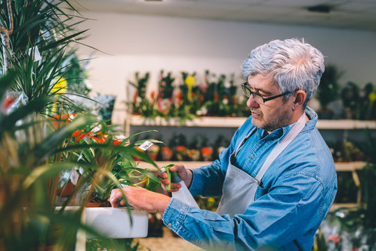 middle aged gray haired man working in flower shop