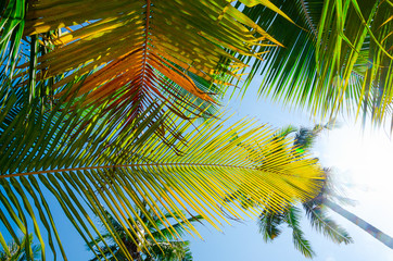 Obraz vacanza estate palma isola - fototapety do salonu