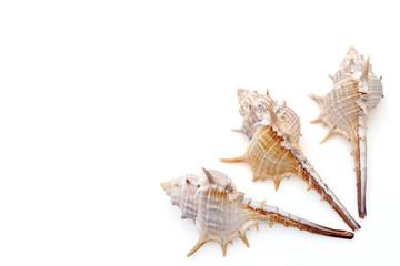貝殻 巻き貝