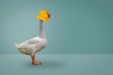 Goose wearing a rubber duck mask on blue pastel background