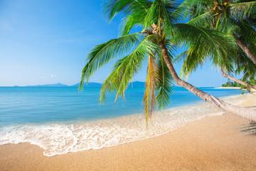 Fototapete - beach and coconut plm tree