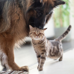 Cat and dog together indoors. Friendship between pets.