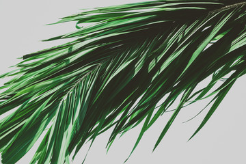 Palm tree foliage. Vintage tropical background. Retro toned. Macro photography.
