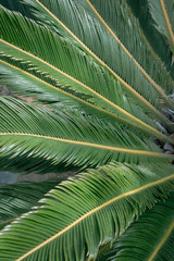 Fern tree leaves in an outdoor garden - good for textured background use with copy space.