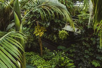 Tropical greenhouse glasshouse sunny interior full of lush green plants. Modern interior architecture. Natural design. Indoor decorative plants. Botanical garden.