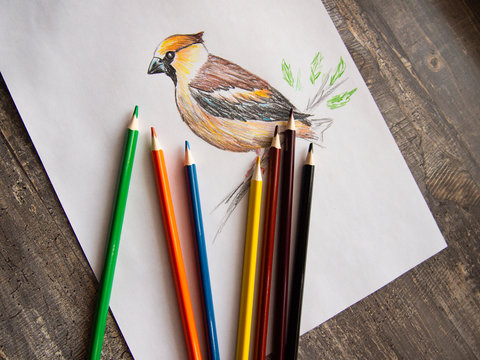 drawing birds with colored watercolor pencils