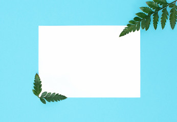flat lay on blu background with white paper sheet for text and fern leaves,  top view, space for text, copy space,