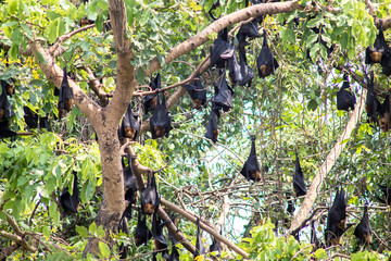 The bats hanging on the tree