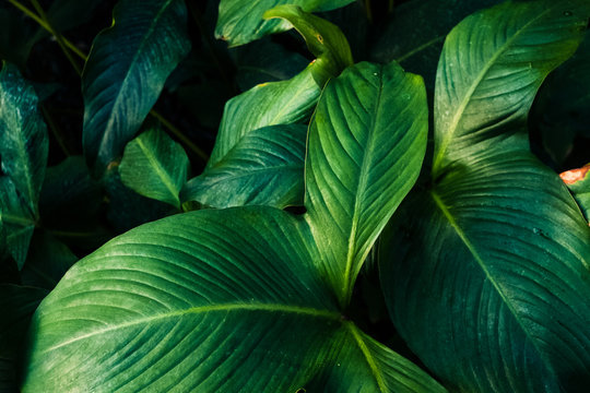 Blätter im Close-Up