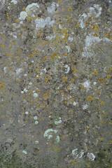 Gravestone texture