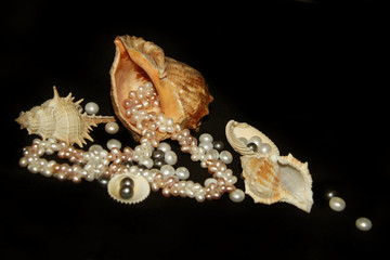 Sea cockleshells and pearls on a black background.