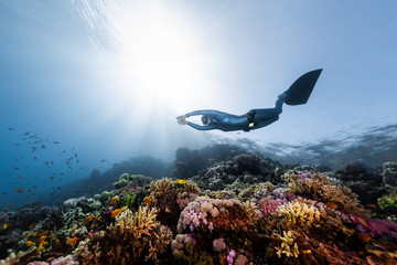 Wall Mural - Woman free diver glides in monofin in the depth over the colorful coral reef