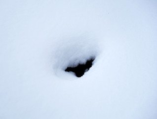 Lonely hole in the snow