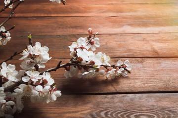 Sakura branches with flowers on a dark wooden background