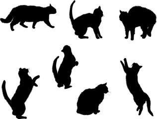 seven small black cats on white