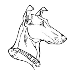 Smooth Collie, dog head portrait black and white icon