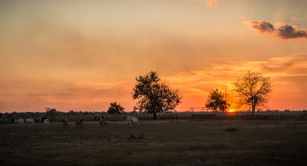 Beautiful and dramatic sunset on the plain