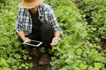 Smart farmers are monitoring crop growth.