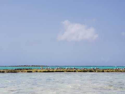 Wonderful baby beach in on Aruba island