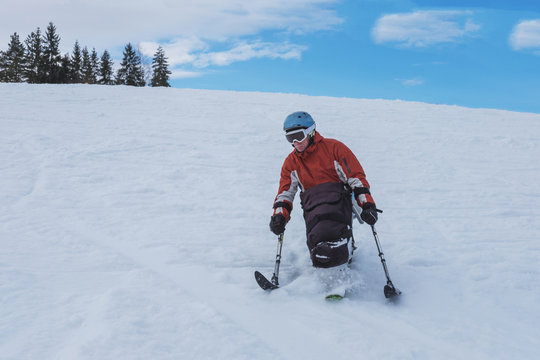 handicapped athlete goes downhill skiing, disabled skier and  adaptive Winter Sports,  handicapped person and sit ski