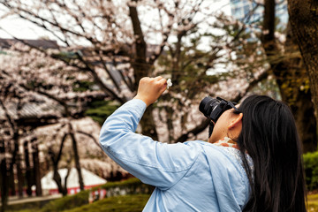 A girl taking photo of a single cherry blossom, enjoying beauty in Japanese park. Travel Japan.