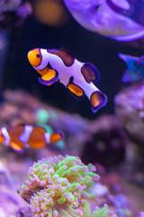 Peixes no aquário com corais