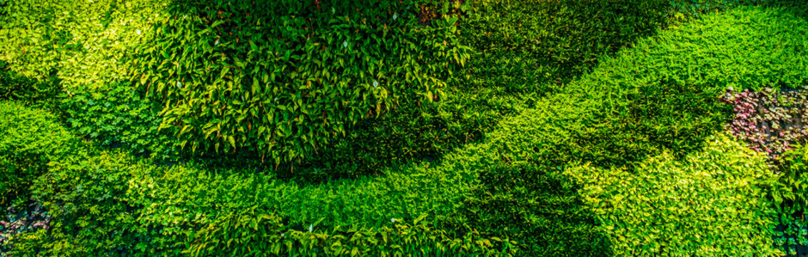 Panorama of decorative green wall plants and leaves, providing oxygen in office