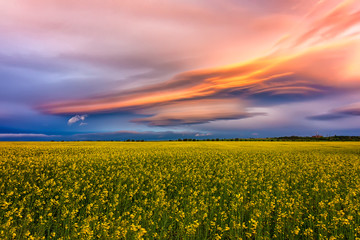 Amazing colorful clouds over the field with yellow rape Fototapete