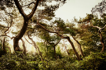 Twisted tree trunks in forest