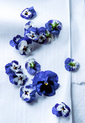 Purple pansy blossoms on white paper towel
